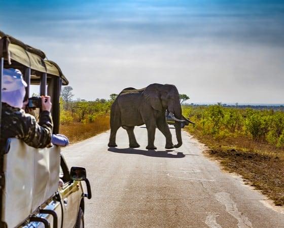 טיול מאורגן לדרום אפריקה - SAV