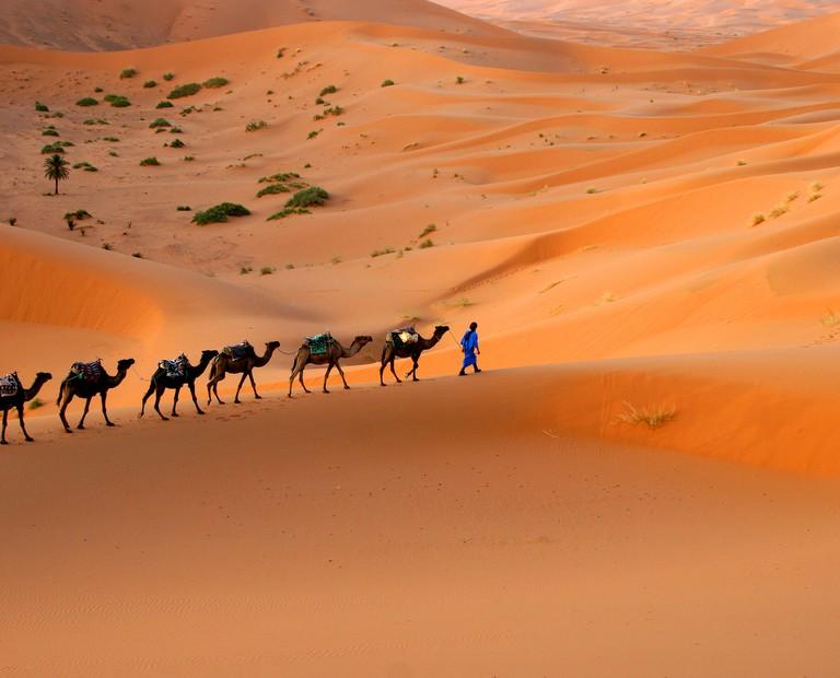 שיירת גמלים במדבר סהרה מרוקו